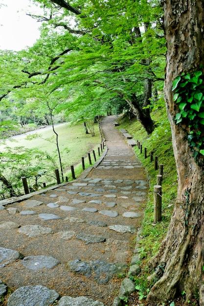 Walkway lane path avec des arbres verts en forêt. belle allée dans le parc. sentier à travers la forêt sombre Photo Premium