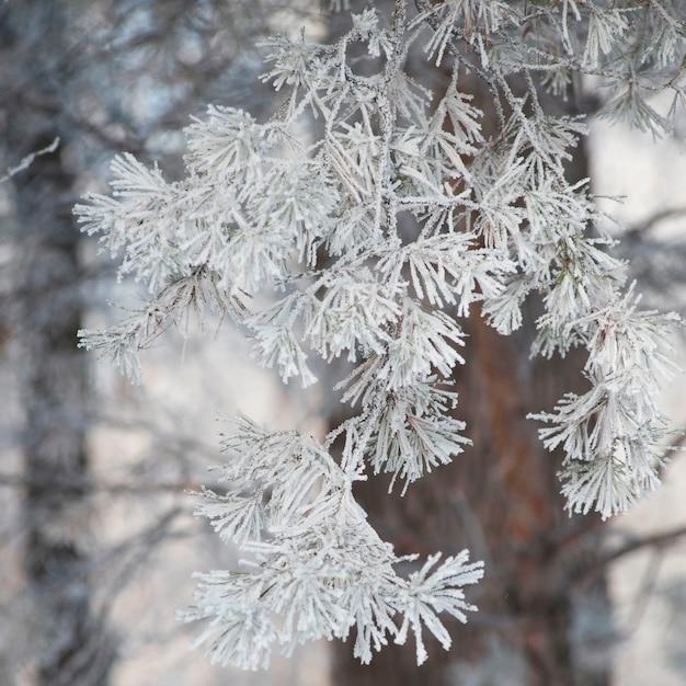 Winnipeg, gelée d'hiver Photo Premium