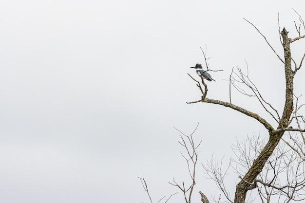 Woodpecker Debout Sur Une Branche D'arbre Sous Un Ciel Nuageux Photo gratuit