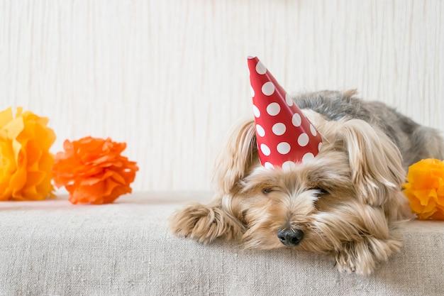 Yorkshire terrier sad (yorkie) chien en chapeau de fête rouge se trouve sur la table Photo Premium
