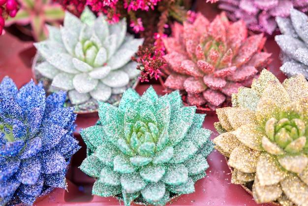 Young (roses en pierre), l'incroyable beauté des succulentes Photo Premium