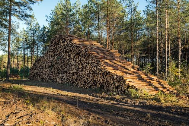 Zone De Déforestation Illégale De La Végétation Dans La Forêt. Photo Premium