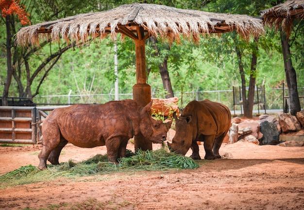 Zoo de ferme de rhinocéros dans le parc national - rhinocéros blanc Photo Premium