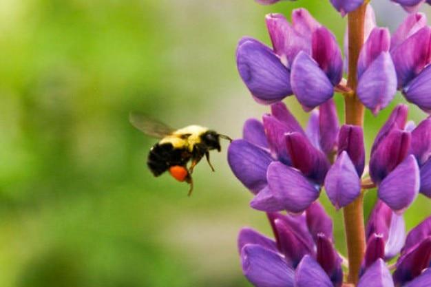 Fleur violette vecteurs et photos gratuites - Image fleur violette ...