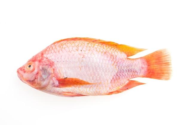 Vivaneau poisson vecteurs et photos gratuites for Alimentation des poissons rouges