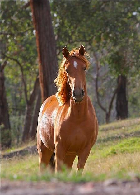 animal cheval stella ferme poney australie photo gratuit
