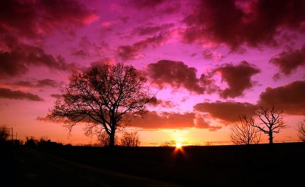 Arbre coucher de soleil nature ciel t l charger des for Photo la nature gratuit