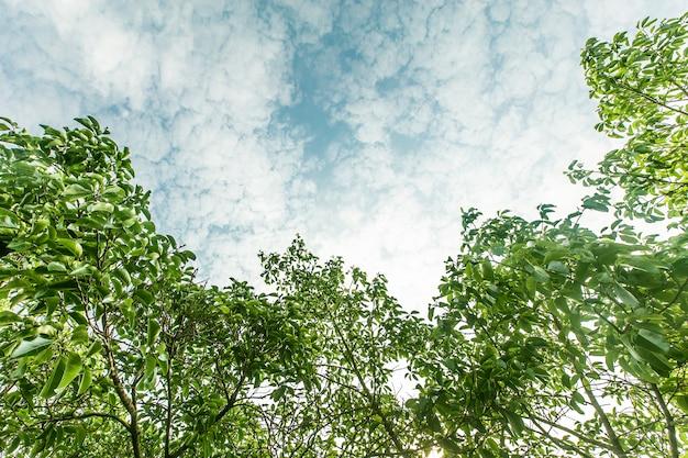 arbre ext rieur pays paysage estival t l charger des photos gratuitement. Black Bedroom Furniture Sets. Home Design Ideas
