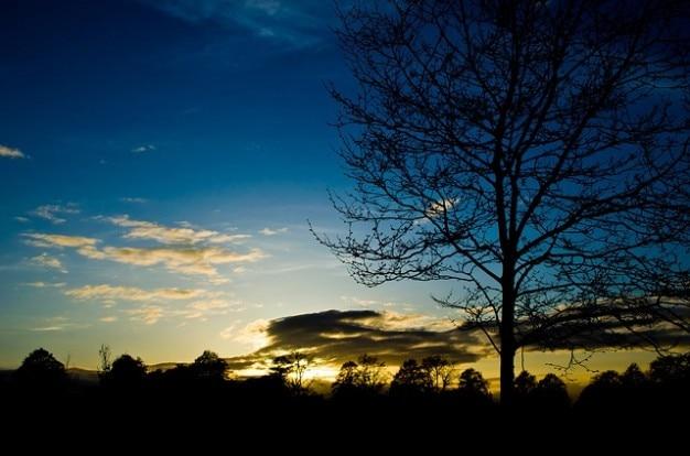 arbres arbre ciel de printemps soir coucher de soleil nuages photo gratuit - Arbre Ciel