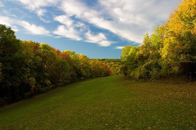 Automne automne for t feuilles caduques arbres couleur - Arbres a feuilles caduques ...