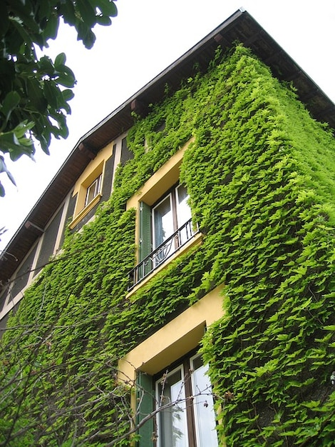 B timent maison de ville lierre plante grimpante t l charger des photos gra - Plante grimpante pour facade maison ...