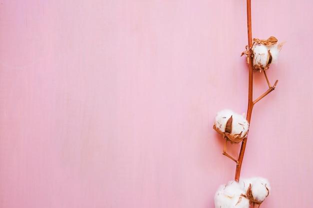 Belle brindille de coton Photo gratuit