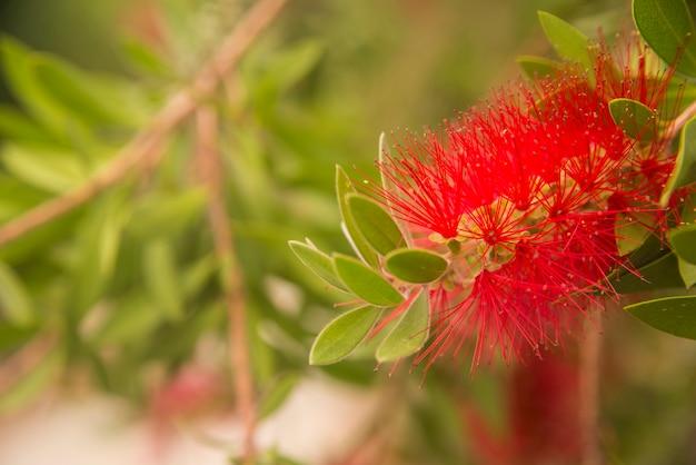 Fleur Boule Rouge Motortrends