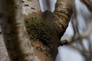 Champignon vert sur un arbre t l charger des photos - Champignon sur tronc d arbre ...