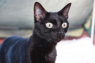 Images de chatte maigre