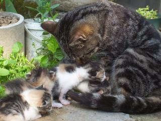 par chatt mager