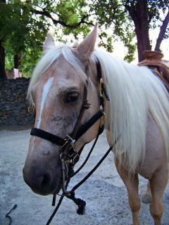 cheval quitation photo gratuit