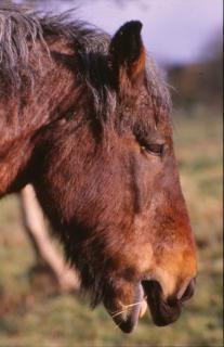 cheval poney cheval photo gratuit