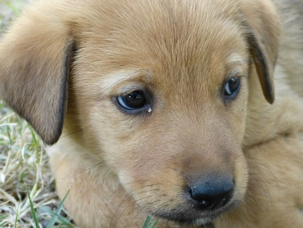 Chiot mignon jeune animal animal de compagnie chien - Animal mignon ...