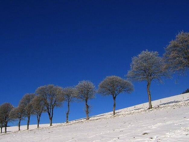 cl ture neige glace hiver froid gel e blanche prairie arbre t l charger des photos gratuitement. Black Bedroom Furniture Sets. Home Design Ideas