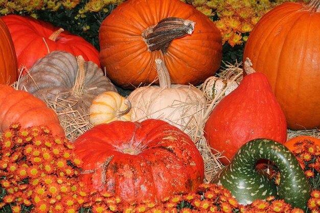 Courge potiron d 39 orange l 39 automne automne halloween - Photo d automne gratuite ...