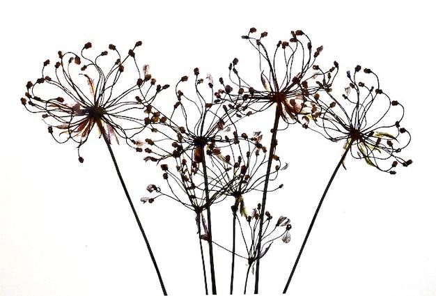 d u00e9coration florale s u00e8che v u00e9g u00e9tale arrangement en filigrane