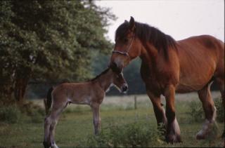 des animaux cheval chevaux photo gratuit