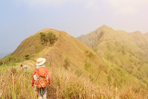Femmes de randonnée avec sac à dos tenant des bâtons de trekking haut dans les montagnes couvertes d'arbres en été. Observation du paysage pendant une courte pause Photo gratuit