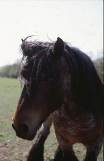 ferme chevaux poney cheval photo gratuit