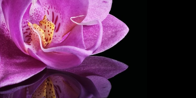 fermer-miroir-miroir-orchidee-fleur-plante-macro_121-101471
