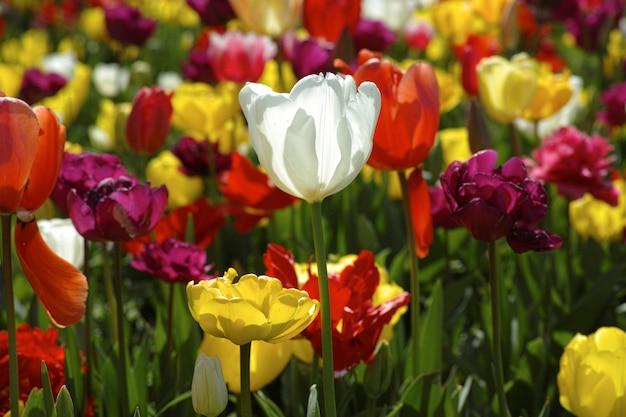 fleur blanche entre autres jaune et rouge t l charger des photos gratuitement. Black Bedroom Furniture Sets. Home Design Ideas