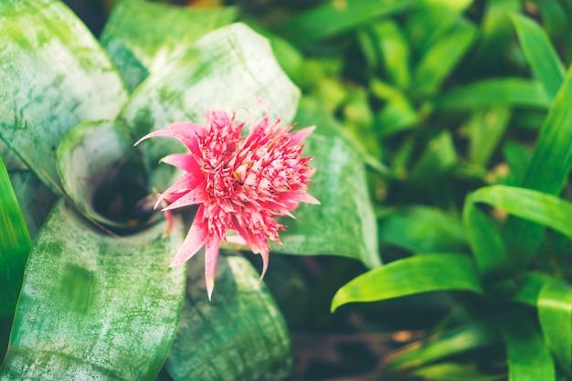 Floral fond de jardinage avec une variété de fleurs de jardin et ...