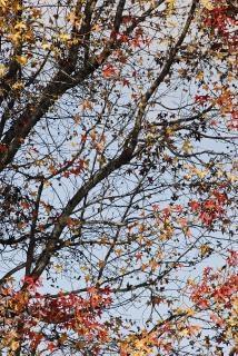 hiver arbre vue en coupe t l charger des photos gratuitement. Black Bedroom Furniture Sets. Home Design Ideas