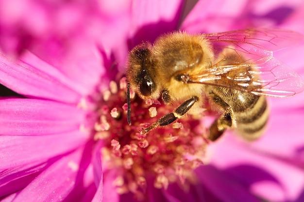 Insecte miel fleur fleurir plante abeille t l charger des photos gratuitement - Qu est ce qui fait fuir les abeilles ...