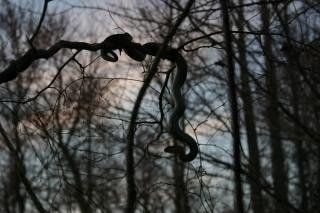 l 39 ombre du serpent d 39 arbre t l charger des photos gratuitement. Black Bedroom Furniture Sets. Home Design Ideas