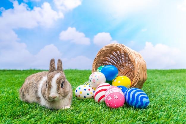 Lapin et oeufs de p ques dans l 39 herbe verte avec le ciel bleu t l charger des photos gratuitement - Image lapin de paques ...