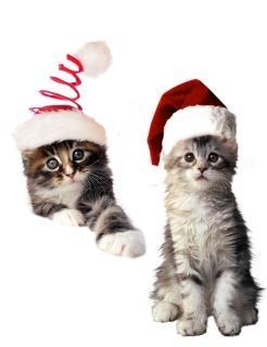 Les chats de no l t l charger des photos gratuitement - Telecharger image de chat gratuit ...