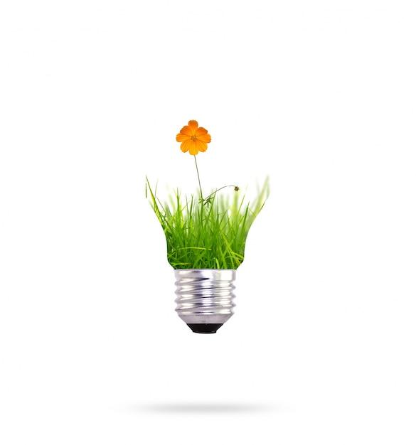 Les nergies renouvelables avec une fleur d 39 oranger for Qu est ce qu une energie renouvelable