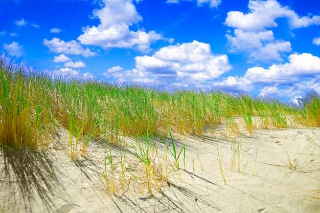 les plantes qui poussent dans le sable | télécharger des photos
