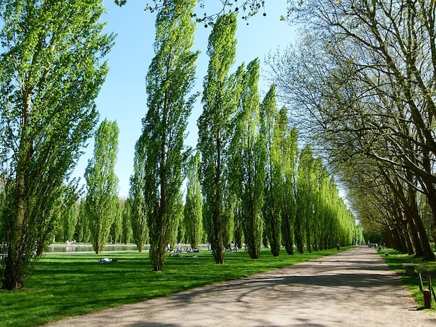 Lignes paysage france peupliers sceaux sc nique arbres for Agence lignes paysage