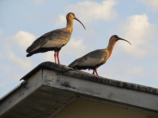 Long bec animal nature oiseau t l charger des photos for Oiseau a long bec