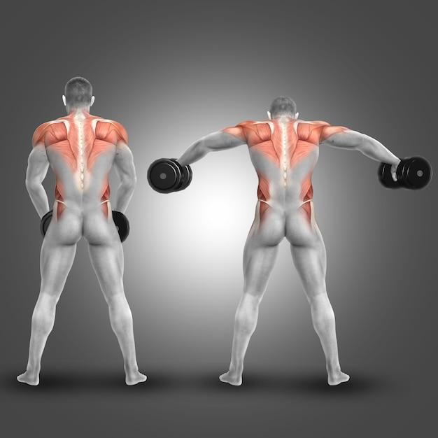 Man soulever des poids et l 39 exercice paules et le dos t l charger des photos gratuitement - Surveiller votre poids gratuit ...