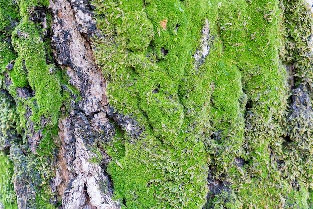 Trunks hdr vecteurs et photos gratuites - Mousse sur les arbres ...