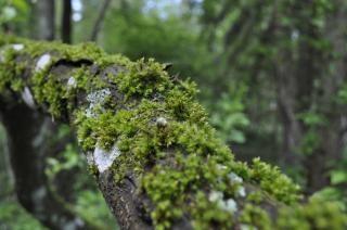 Mousse sur mousse d 39 arbre t l charger des photos gratuitement - Mousse sur les arbres ...