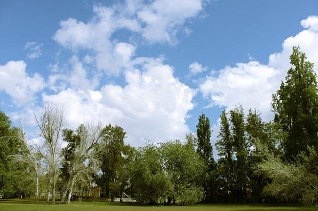 Nuages Ciel Arbres Nuage Parc T L Charger Des Photos Gratuitement