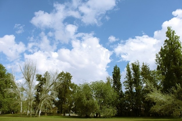 nuages ciel arbres nuage parc photo gratuit - Arbre Ciel