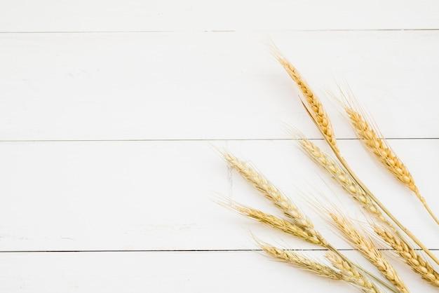 Oreille de blé de couleur dorée devant un mur en bois blanc Photo gratuit