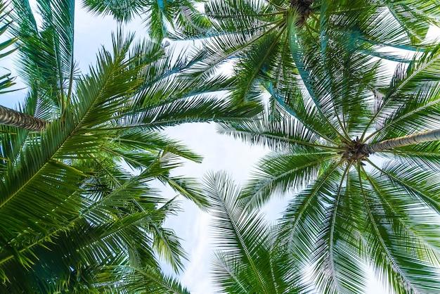 palmier 0 noix