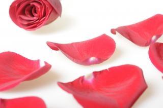 p tales de rose romance rouge t l charger des photos gratuitement. Black Bedroom Furniture Sets. Home Design Ideas