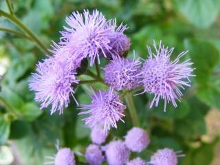 petites fleurs bleues l 39 t t l charger des photos gratuitement. Black Bedroom Furniture Sets. Home Design Ideas